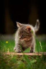 Kitten verspielt