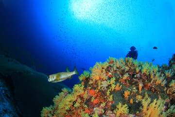 Scuba diver explores underwater coral reef