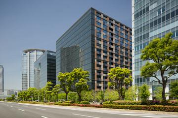 Fototapete - 新緑のオフィスビル街