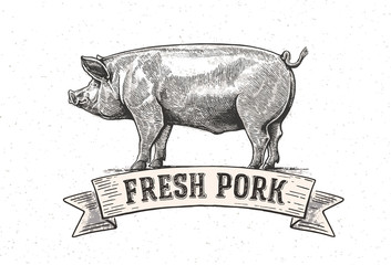 "Graphic pig with the inscription:""Fresh pig"". Vector illustration drawn, by hand."