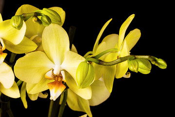 Wall Mural - Beautiful orchid on dark background