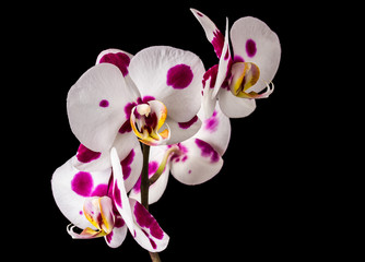 Fototapete - Beautiful orchid on dark background