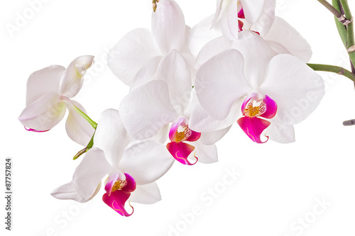 Fototapete Beautiful orchid on white background