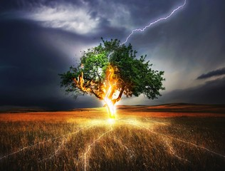 Photo sur Plexiglas Marron chocolat Lightning Tree