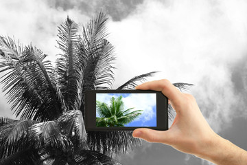 Hand taking photo of palm by smartphone