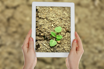 Using tablet to take photos of green plant in soil