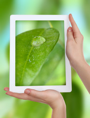 Using tablet pc to take photos of green leaf with drop