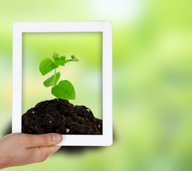 Using tablet pc to take photos of green plant in soil