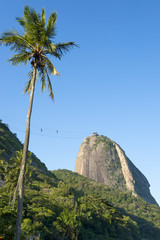 Sugarloaf Pao de Acucar Mountain standing in blue sky with tall palm tree Rio de Janeiro Brazil