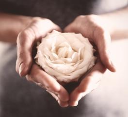 Bud of beautiful white rose in female hands, closeup