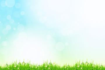 Fresh green grass with blue bokeh and sunlight. Beauty natural b