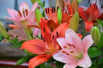 Farbenfrohe Lilienblüten