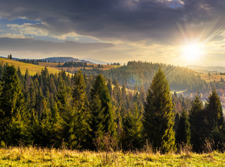 coniferous forest in  mountains at sunset