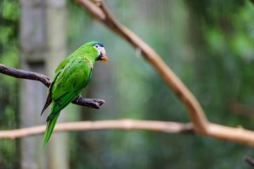 Parrot in bird park, Iguazu, Brazil