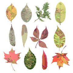 Leaf collection - color vector