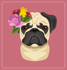 Vector pug dog portrait flat illustration