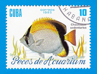 Cuba stamp 1985 - Aquarium fish Chaetodon sedentarius