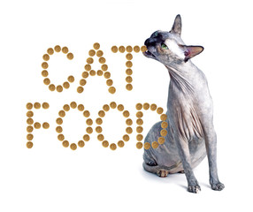 Sphynx cat and the inscription of the feed 'cat food'