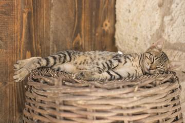 Cat sleeping on the wicker basket