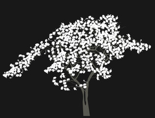 white tree blossom isolated on black