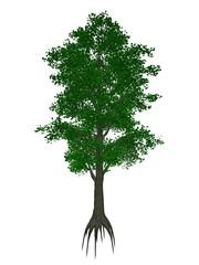 Small-leaved lime or little-leaf linden, tilia cordata tree - 3D