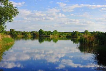 Forest lake landscape