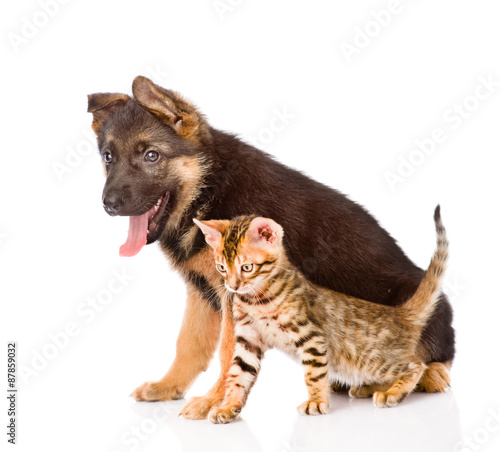 German Shepherd Puppy And Bengal Kitten Sitting In Profile Isol