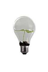 Seed growing in lightbulb on white background.