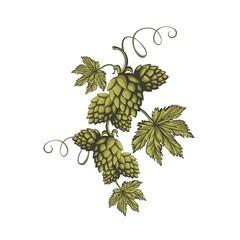 Green hops ornament.