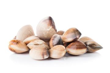 enamel venus shell on a white background