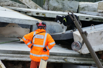 rescue dog searching for casualties in building collapse