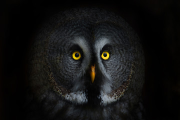 Foto auf Acrylglas Eulen cartoon big eyed owl, staring owl