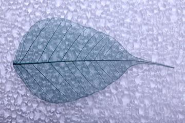 Keuken foto achterwand Decoratief nervenblad Abstract skeleton leaves background