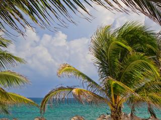 Palm Framed
