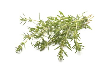 Summer savory isolated on white background