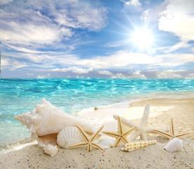 Karibik: Muscheln und Seesterne vor blauem Himmel :)