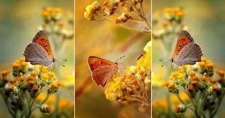 Motyle wśród kwiatów