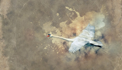 Schwan im Flug