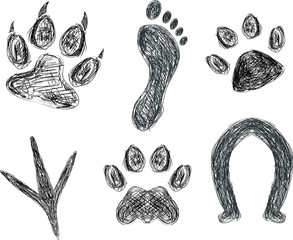 Sketch of animal footprints and paw prints.