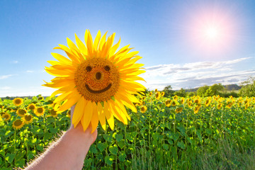 Wall Mural - Happy sunflower time
