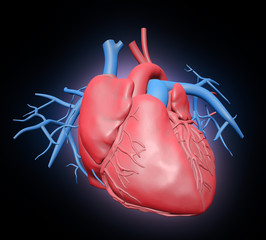 Human heart illustration