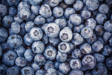 Heap of freshly picked blueberries
