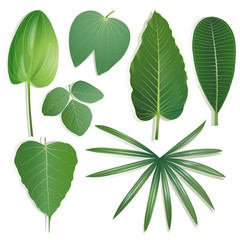 Set of different shape of leaves on isolated background Set 2