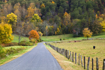 Cow Pasture Beside a Road in the Fall