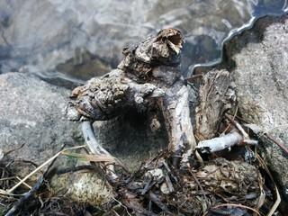 Bois & roches dans l'eau