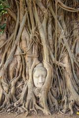 Head of sandstone buddha in tree root