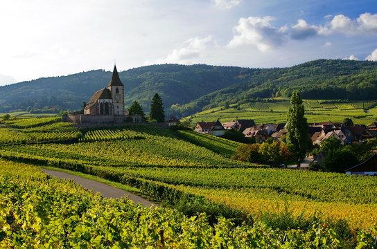 Paysage de vignoble en Alsace.