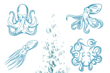 Original close up vector illustration of hand drawn octopus.