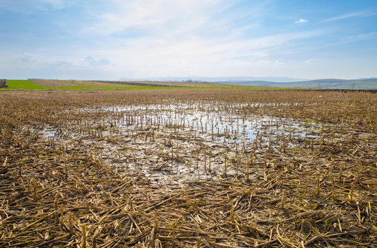 Flooded farm land corn field with remains after harvesting due to heavy rain causing a puddle and wet land on a sunny spring day with a blue cloudy sky
