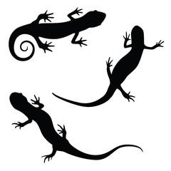 salamander silhouette illustration set